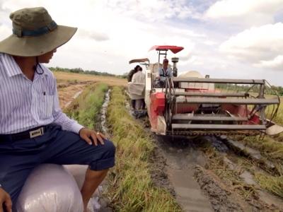 dev.TV: Rice Harvester